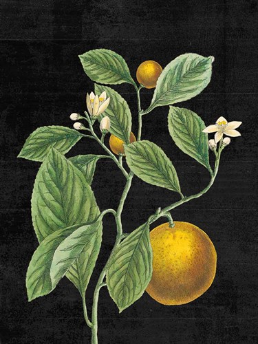 Classic Citrus VI Black No Words art print by Sue Schlabach for $42.50 CAD