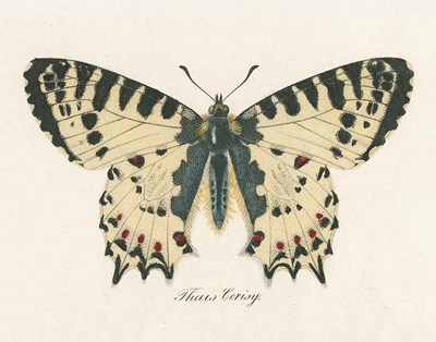 Natures Butterfly I art print by Wild Apple Portfolio for $57.50 CAD