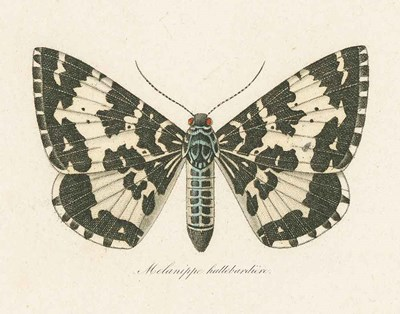Natures Butterfly II art print by Wild Apple Portfolio for $57.50 CAD