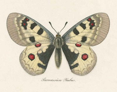 Natures Butterfly III art print by Wild Apple Portfolio for $57.50 CAD