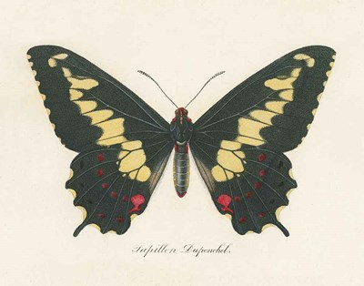 Natures Butterfly VI art print by Wild Apple Portfolio for $57.50 CAD