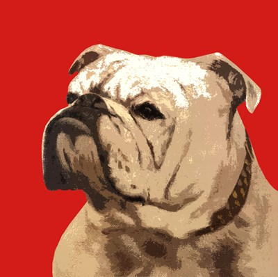 The British Bulldog, Red art print by The Vintage Collection for $75.00 CAD