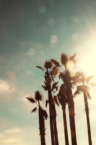 Palms in the Sun art print by Emily Navas for $37.50 CAD